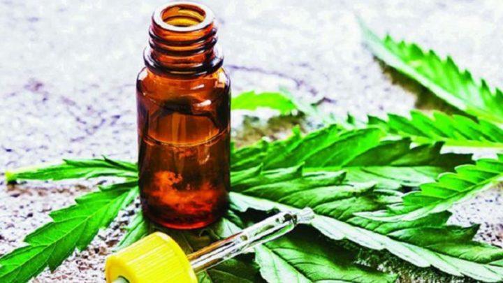 Aprobaron el cultivo y uso terapéutico de cannabis en Castelli