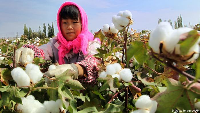 Agricultura 4.0En busca de una nueva agricultura libre de pesticidas químicos