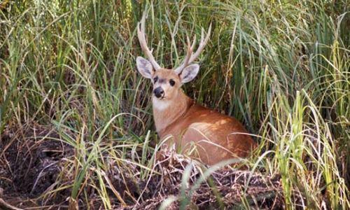 CONADIBIOCabandié encabezó el relanzamiento de la comisión nacional de biodiversidad