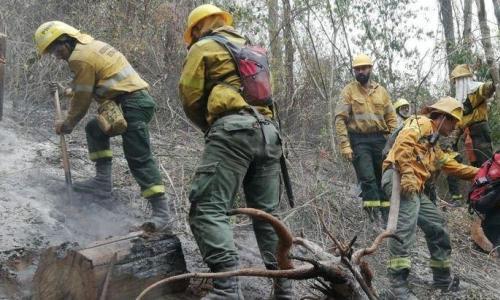 JujuySe quemaron 210 hectáreas del Parque Calilegua