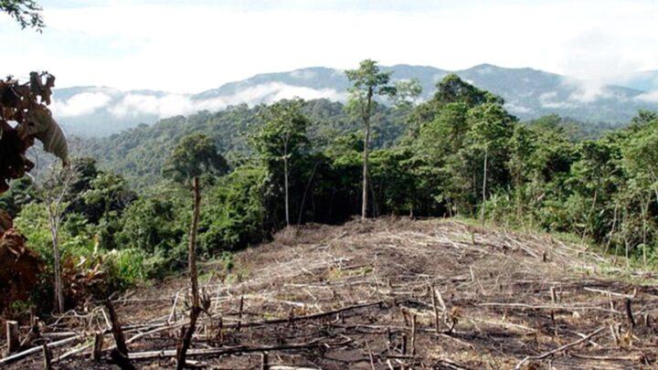 En cuatro provincias argentinasGreenpeace denunció que durante la cuarentena se deforestaron casi 50.000 hectáreas en el país