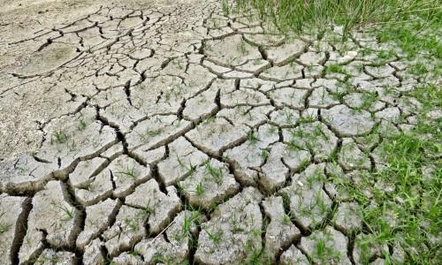 Lucha contra la DesertificaciónArgentina participó del Comité de Revisión de la Implementación de la Convención de Naciones Unidas