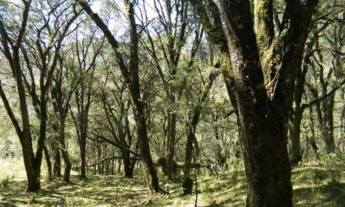 El Día de los Bosques en ArgentinaCumplir la Ley para celebrar la naturaleza