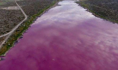 """Una laguna se """"tiñó"""" de rosa en Chubut, denuncian contaminación y hay dos municipios enfrentadosPolémica por vertido pesquero en Chubut"""