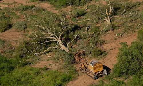 Ex funcionarios de Medio Ambiente y empresarios forestales procesados por la tala prohibida de bosquesEx funcionarios de ambiente imputados por tala prohibida