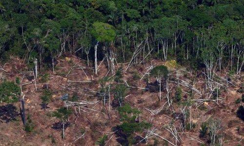 Cómo se usarán US$82 millones para combatir la deforestaciónUS$82 millones para bosques: ¿Como se emplearán?